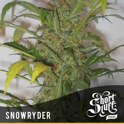 Snowryder Auto