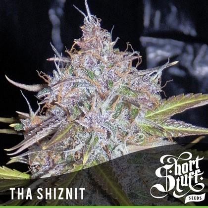 Auto Tha Shiznit