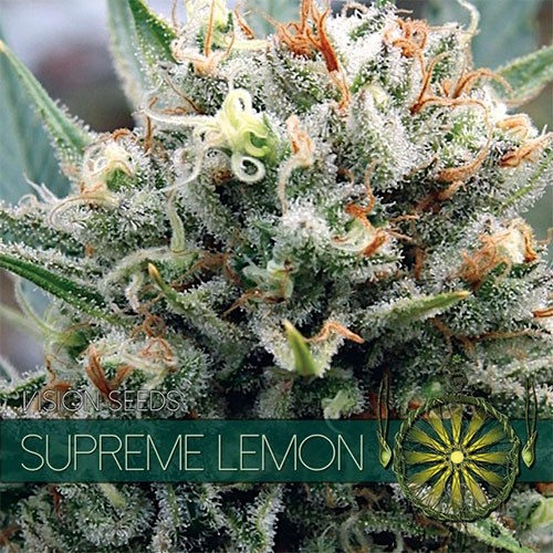 Supreme Lemon fem