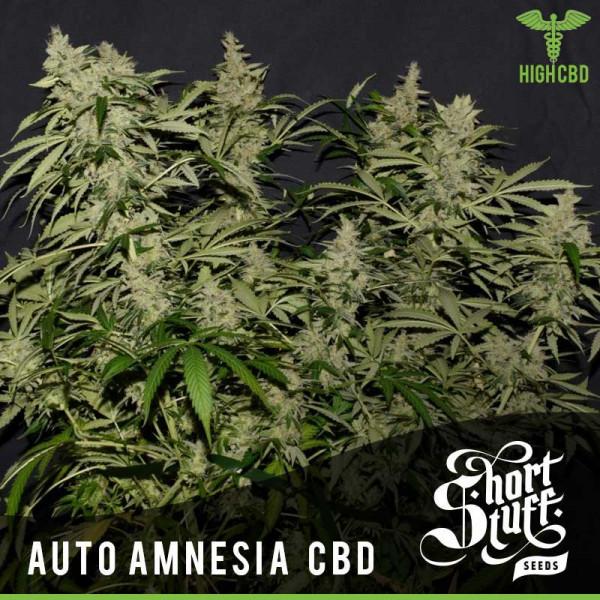 Auto Amnesia CBD