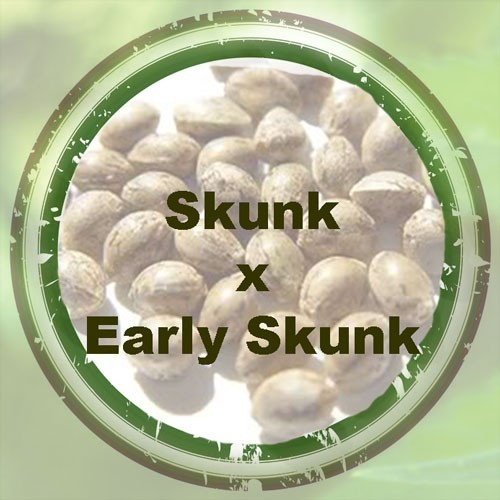 Skunk x Early Skunk