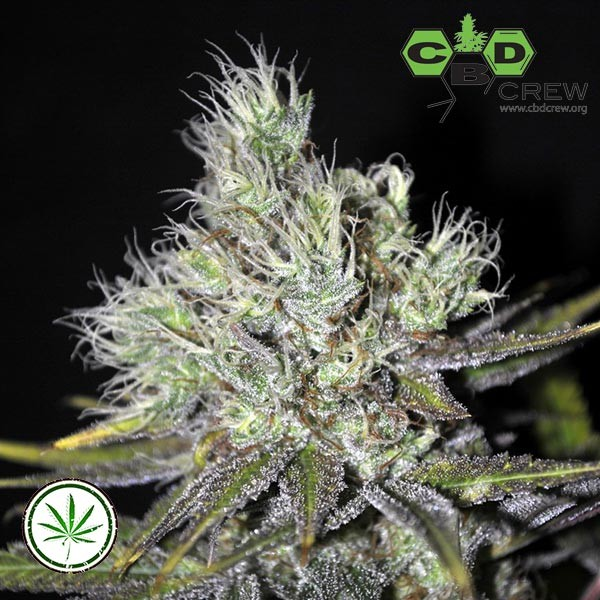 Sweet and Sour Widow