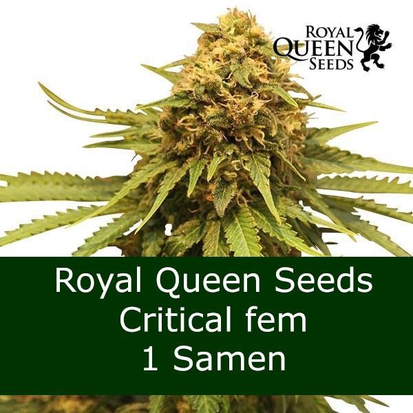 1 Seed Critical fem RQS - Bonus