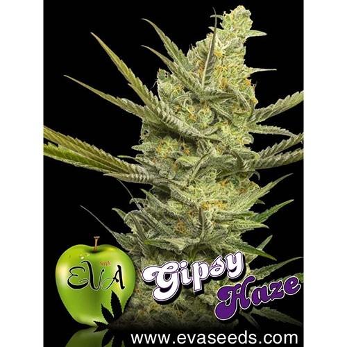 Gipsy Haze fem