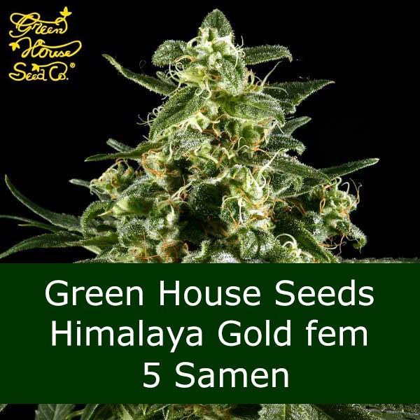 5 Seeds Himalaya Golf fem - GH Bonus
