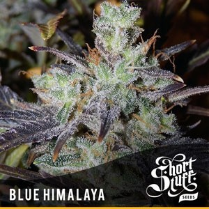 Blue Himalaya Auto
